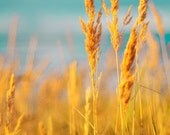 Nature photography Vintage summer seaside gold golden yellow grass. Modern home decor. Close to the sea. Home decor 10x15
