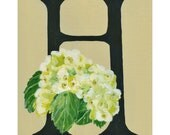 Floral Alphabet, 5x7 print, H is for Hydrangea