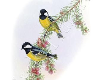 BIRDS Instant Download titmouse Digital Downloads birds wedding clipart 177