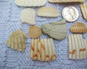 Craft shells, wampum, natural shells fragments, home beach decor, jewelry supplies (Lot 136)