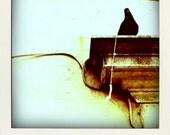 Our Friend Pigeon - Polaroid Fridge Magnet