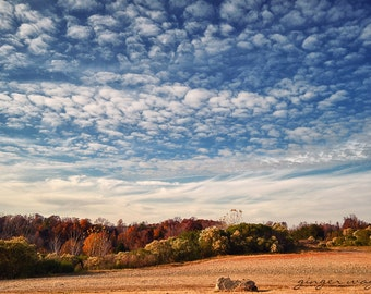 Landscape Photography - Glorious Autumn - 8 x 12 fine art print - sky, clouds, white, blue, beige, trees, autumn, warm tones, home decor