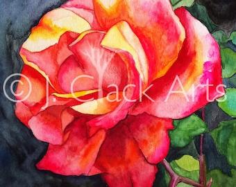 Monterey Rose