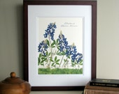 Pressed flowers print, 11x14 double matted, Texas Bluebonnets, Texas wildflowers, Texan gift, botanical art print, wall decor no. 0030
