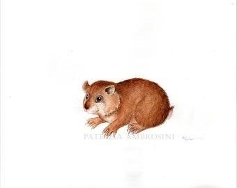 Original Watercolour 10X8  Hamster No.1.. Not a print ..original painting, animal ,fine art,