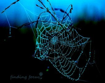 Spiderweb Photography, Turquoise Cobalt Electric Blue Black Raindrops Dew Drops Spider Web, Dark Sapphire Aqua Dreamy Whimsical Photograph