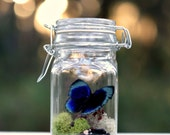 Terrarium Kit, Real Butterfly in Glass Jar Terrarium Kit, Gift for Nature Lover, DIYer Kit, Mother's Day Gift,  Gardener and Naturalist