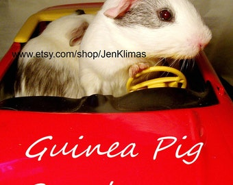 """GUINEA PIG SPEEDRACER Portrait - Piggy In a Red Sports Car - Limited Edition 8x10"""" Cavy Photograph"""