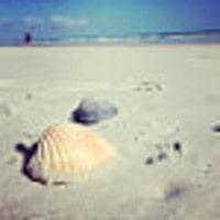 beachdaisy7