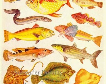 North Atlantic Ocean Fish Ichthyology Natural History Lithograph Chart 1920s  Art For Framing