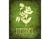 16x20 Science Art Poster,  Gregor Mendel Biology Print, Steampunk Rock Star Scientist, Pea Plant Genetics Geek Chic Decor