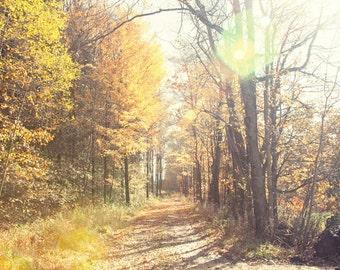 landscape photography, fall fine art decor, autumn photography, orange home decor, large living room art, tree photography