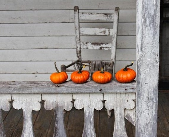Orange Pumpkins Fine Art Photography 8x10 print rustic, cabin decor, halloween, thanksgivng, fall decor