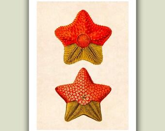 Sea star Print 6,  Ocean starfish Print, Nautical  Art Print, Matte Print 5x7
