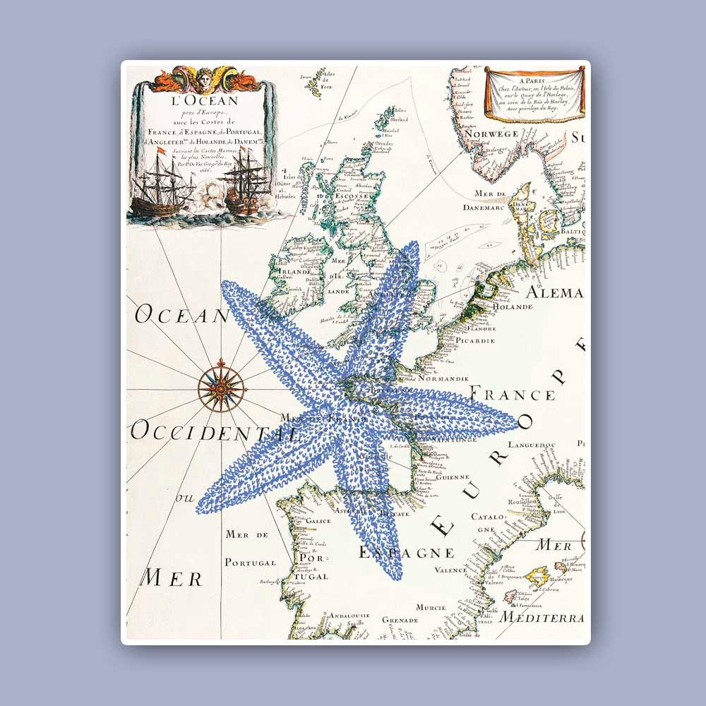 Nautical Starfish Print on antique map Sea star Marine Wall