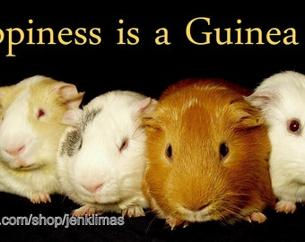 """HAPPINESS is a GUINEA PIG Print - Limited Edition 8x10"""" Photograph"""