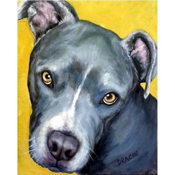 Pit Bull Dog Art Print Blue Pit Bull Face On Gold By Dottie