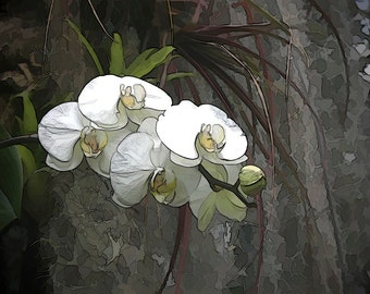 Orchid Enhanced Digital Art, Office Wall Art, Home Decor, unframed Giclee print, EBSQ