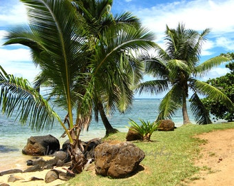 Kauai Tropical Beach Photography- Palm Tree photos Sandy Beach Green Blue Aqua Decor Tropical Wall Art Print- 5x7, matted, 8x10 Travel Photo