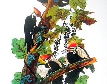 Pileated Woodpecker Vintage Audubon Bird Print Book Plate 1987