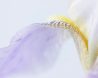 Iris Print, Purple Iris Macro Photo, Flower Photography, Pastel Wall Decor, Flower Art, Bedroom Art