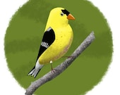 Yellow Finch Bird Art Print
