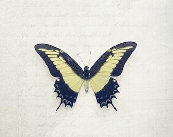 8x12 Swallowtail