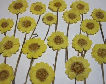 Dried Pressed Flowers for Crafting - Yellow Daisies