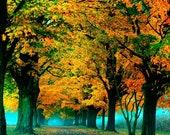 Fall photograph autumn leaves nature photography print sleepy hollow orange leaves Thanksgiving photo fine art photograph