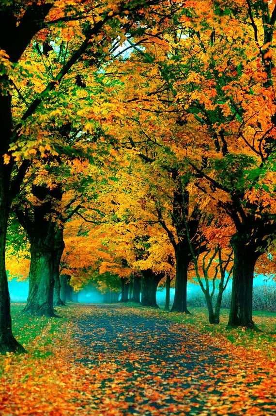Fall photograph autumn leaves nature photography print