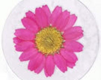 25 Real Pressed Flower Stickers - PINK NORTHPOLE (Pack of 25)