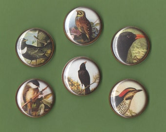 Ravens and Wrens 1 inch button set