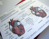 Project Heart Cardiac Muscle - Blank Architecture Construction Card