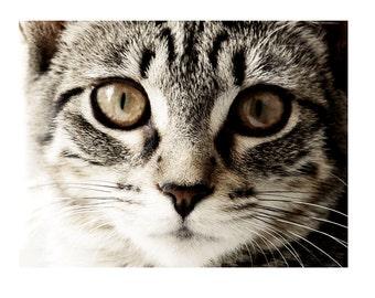 Cat Photography Tabby Sepia 11 x 14 Wall Art Decor