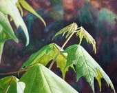 Art Leaves Watercolor Painting Original by Cathy Hillegas, New Maples, spring, growth, emerald green, yellow, purple, red, brown
