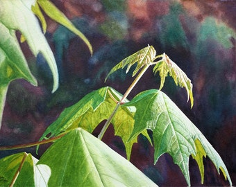 Leaves Art Watercolor Painting Print by Cathy Hillegas, New Maples, maple leaves, green, yellow, orange, purple, blue, brown