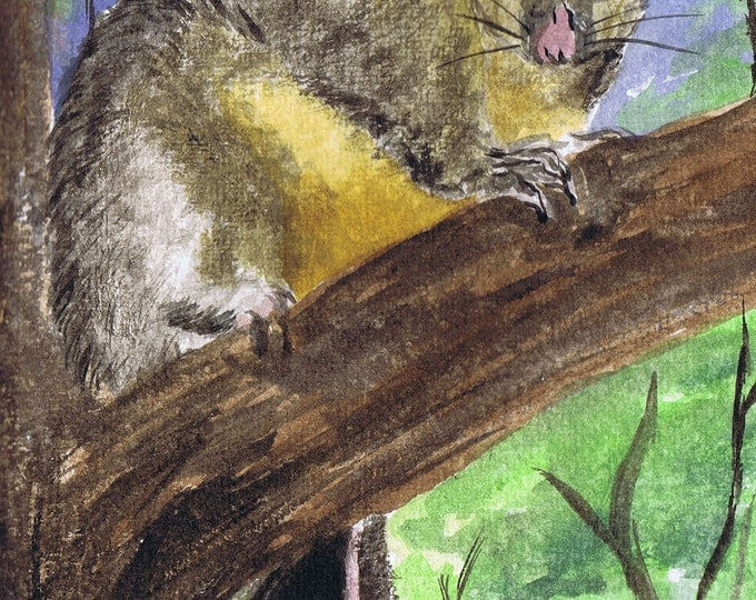 Brush-tailed Possum Original watercolour By Cindy Watkins Photographic print on card. Blank Gift Card.