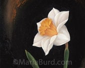 Magnet Daffodil - Original Oil Painting on Wood 8x8