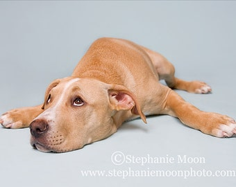Dog Photography, Picture of Dog on blue background