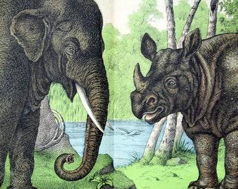 Antique Print of Elephant and Rhinoceros - 1889 Vintage Chromolithograph