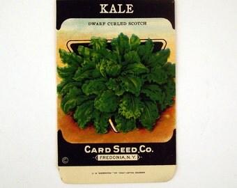 Vintage 1920s Unused Paper Seed Packet Kale