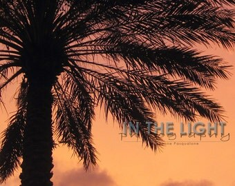 READY To SHIP - Palm Tree Sunset 1 - Sarasota FL - Fine Art Photograpy - 8x10, 11x14, other sizes available - fPOE