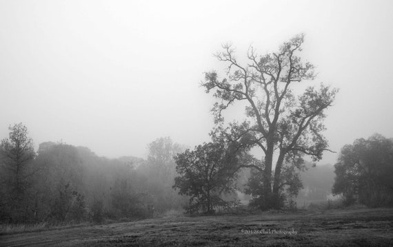 Black and White Fine Art Photography Romantic Foggy Misty Landscape Trees Woodland Dreamy Home Decor Lonesome Morning