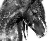 Washakie's Dream - Wild Stallion - Fine Art Photograph