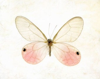 "Pink pastel insect botanical specimen summer dreamy macro closeup spring minimal - ""Glasswing Butterfly"" 8 x 10"