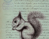 Squirrel on Old Blue French Document print