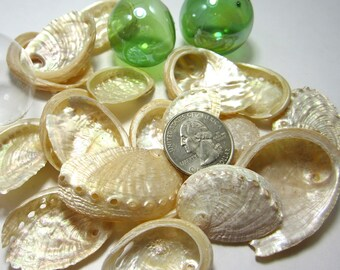 Beach Decor Sea Shells - Nautical Decor Seashells - Beach Wedding Decor Abalone Seashells - Abalone Shells - Beach House Decor 12PC