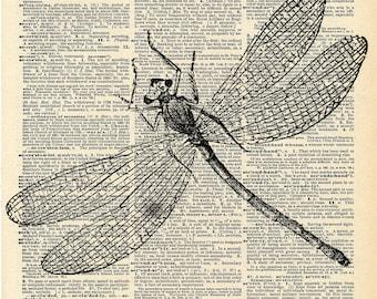 Antique Book Print - Dragonfly Insect Art Print - Art Nouveau Book Art Print - Natural History Insect Illustration - Elegant Victorian Art