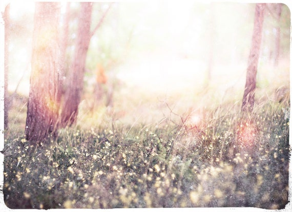 "Fairy Tale Woodland Photo ""Baby Birch"" Ethereal Forest - Fine Art Photograph Print - Light Whimsical Photography"