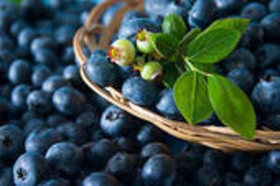 1 oz Blueberry fragrance oil
